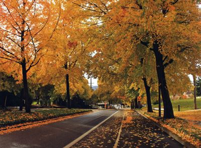 A tree lined street in the Fall
