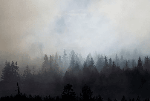 Smoke in air above trees
