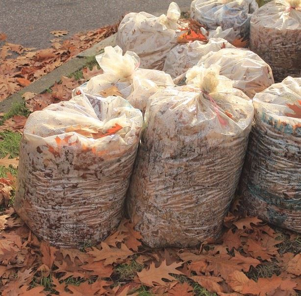 Raked leaves in bags